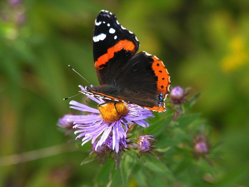 8 Impressive Ways to Growing more in Your Garden Space butterfly